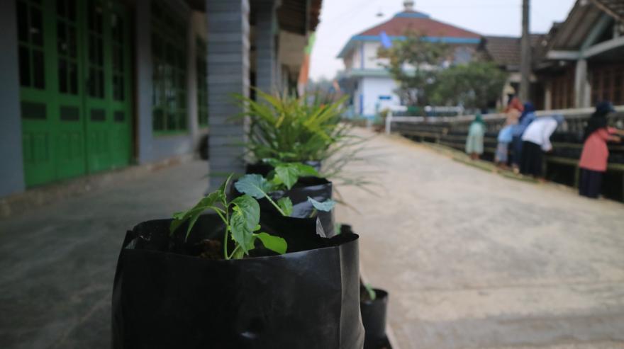Image : Menyulap pekarangan menjadi indah dan bermanfaat